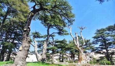 Топ-5 самых популярных мест в Ливане.