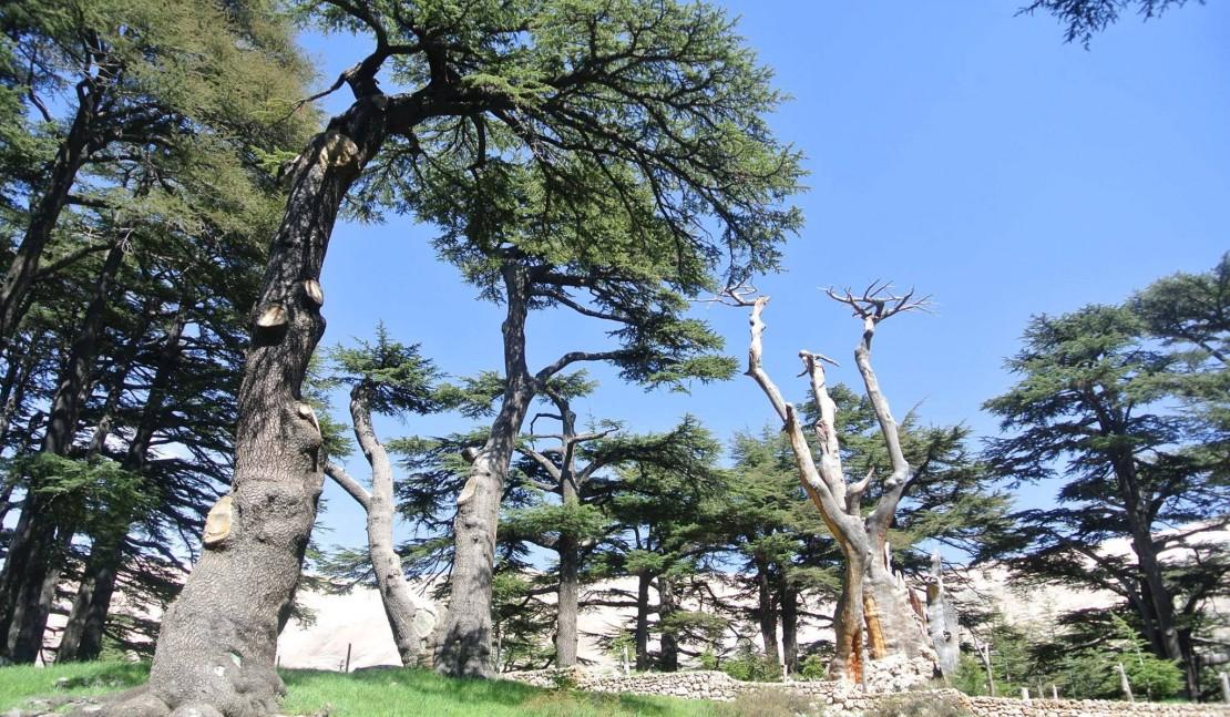 Скульптуры в заповеднике «Божественные кедры»